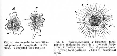 protoplasm function